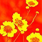 Fire Flowers by Mechelep