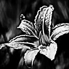 Day Lily by Mechelep