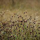 The Meadow #1 by Matt West