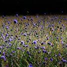 The Meadow #3 by Matt West