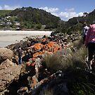 rock scrambling at Boat Harbour by gaylene