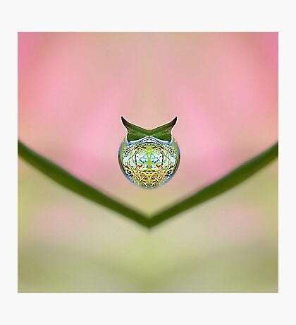 Dew Drop Design ;-  Most products . Photographic Print