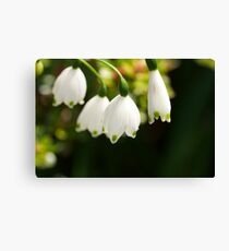 LILY ELITE Canvas Print