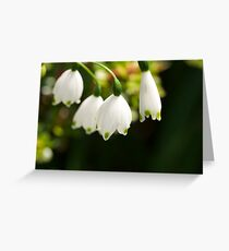 LILY ELITE Greeting Card