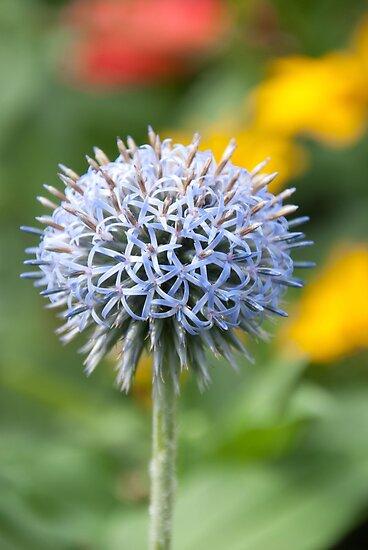wildflowers von Julien mayard