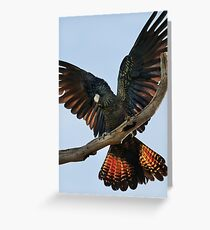 """Red Tailed Black Cockatoo"" Greeting Card"