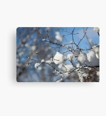 Snowy branches, Otley Chevin Canvas Print