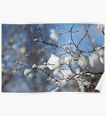 Snowy branches, Otley Chevin Poster