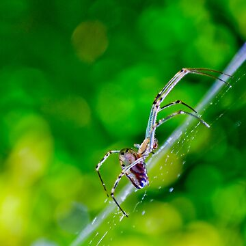 Orb Weaver in the garden by kordis