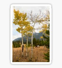 Beautiful Horse Autumn Aspen Trees Grove Grazing Sticker