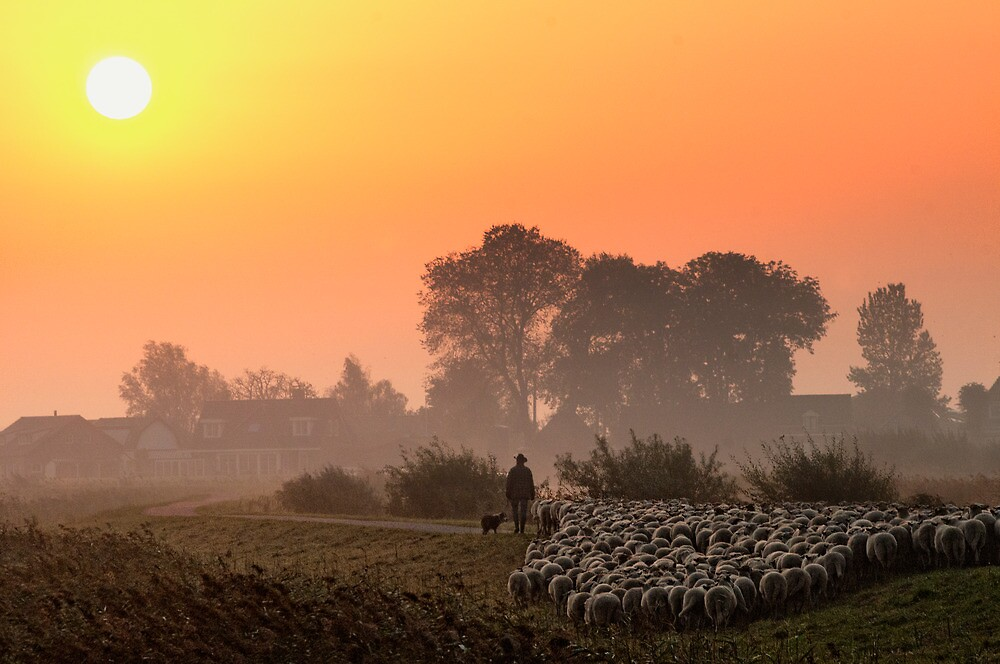 The herder 2 by THHoang