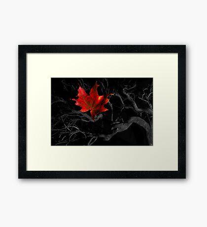 The Red Leaf Framed Print