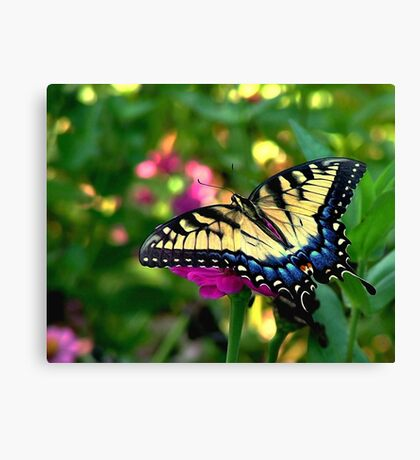 Summer Visitor Canvas Print
