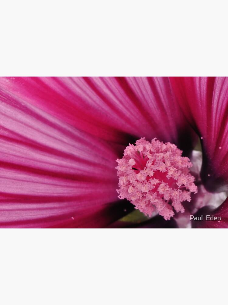 Pink Flower by pauleden