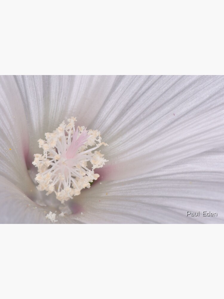 Crystal Flower by pauleden