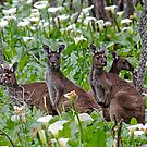 Kangaroos in the Tuart Forest by JuliaKHarwood
