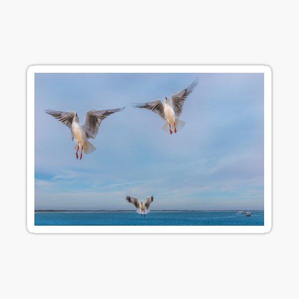 Seagull Angels Sticker