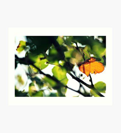 Welcoming Autumn Art Print
