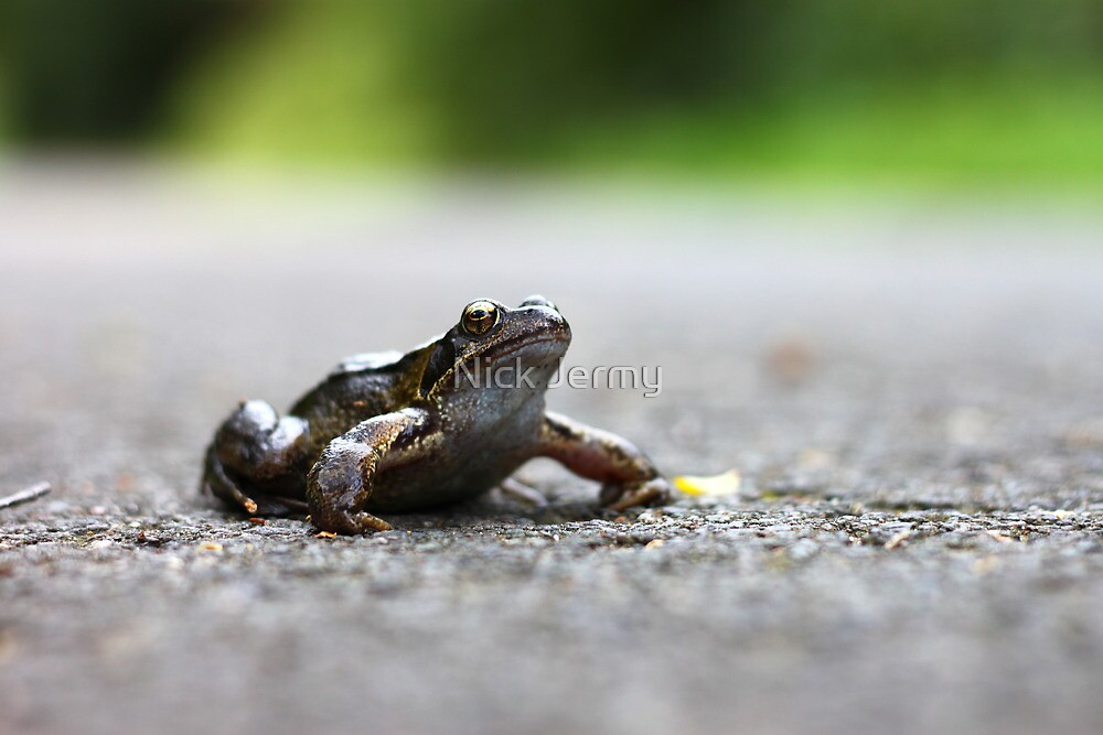 Frog in the Road by Nick Jermy