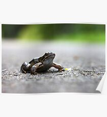 Frog in the Road Poster
