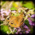 Beautiful wings by vasu