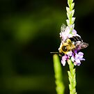 Bee  by vasu