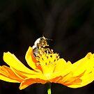 Dance with Pollen by vasu