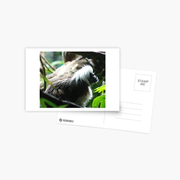 Tamarin monkey Postcard