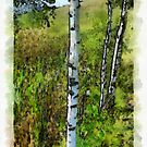 Birches,painted. by alaskaman53