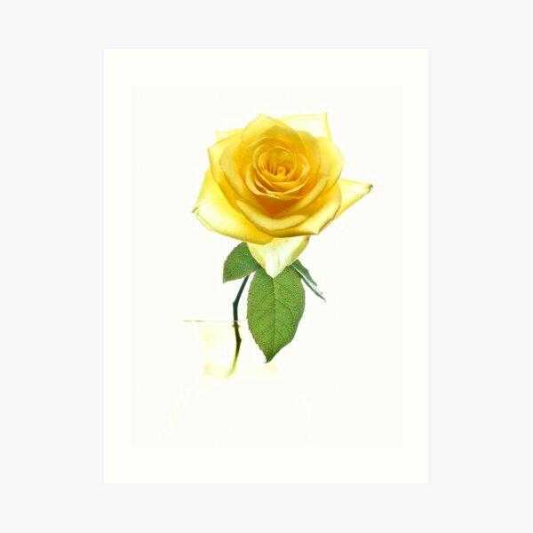 Fantasy Rose Art Print