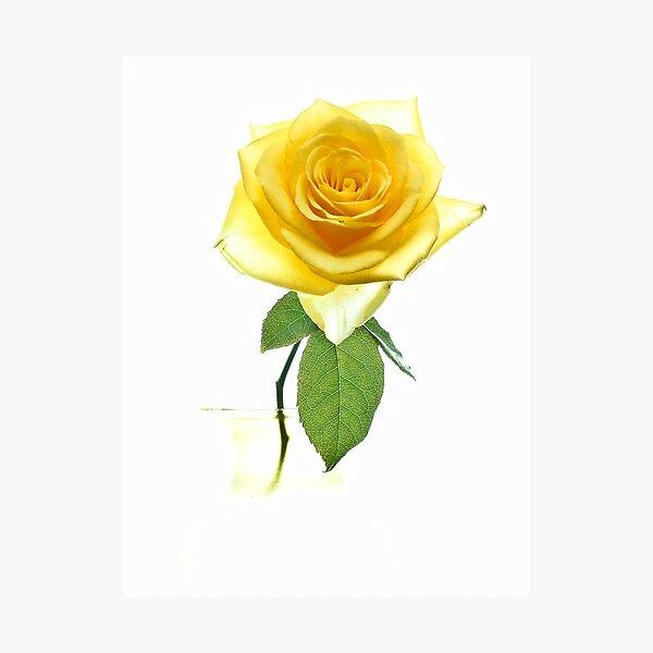 Fantasy Rose Photographic Print