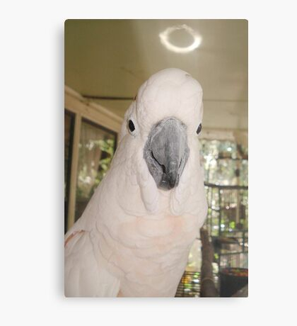 MY LITTLE ANGEL, CASSIE Metal Print