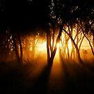 Golden Dust by Lachlan Kent