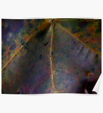 Rainbow Leaf (8033) Poster