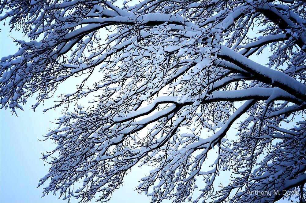 Snow Tree by Anthony M. Davis