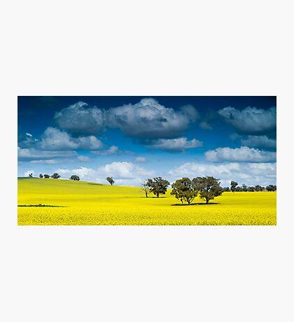 A farmers paint palette Photographic Print