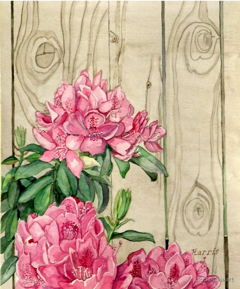 Pink Rhododendron With Knotty Wood Fence by clotheslineart