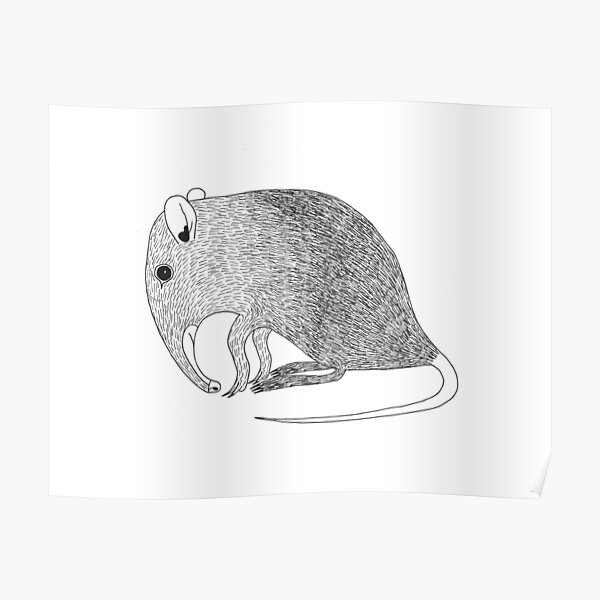 Elephant Shrew (ink illustrations of weird animals that are real) Poster