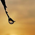Dew Drop Sunrise by relayer51