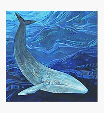 Blue whale painting - 2012 Photographic Print