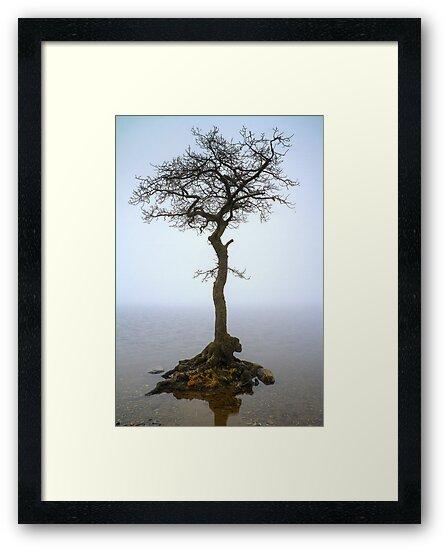 Milarrochy Tree (3) by Karl Williams
