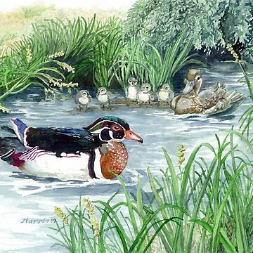 Wood Duck by clotheslineart