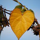 Heart Leaf by Jonice