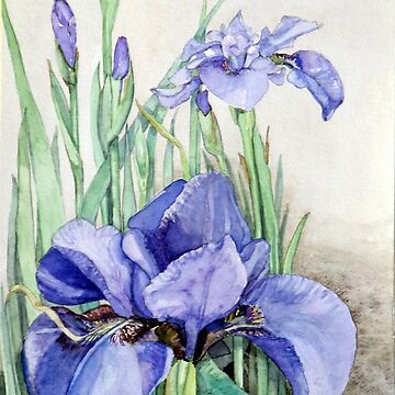 Purple Iris by clotheslineart