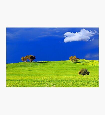 Green Acres  Photographic Print