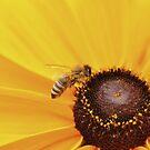 Busy Bee by Shubd