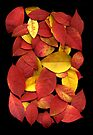 Leaves on a Scanner by Stephen D. Miller