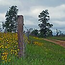 Wildflowers on a Country Road by Susan Blevins