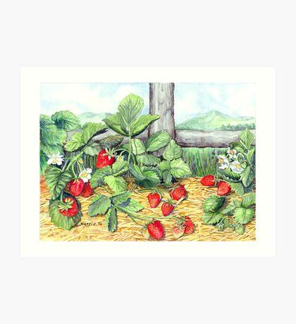 Strawberries and Rail Fence Art Print