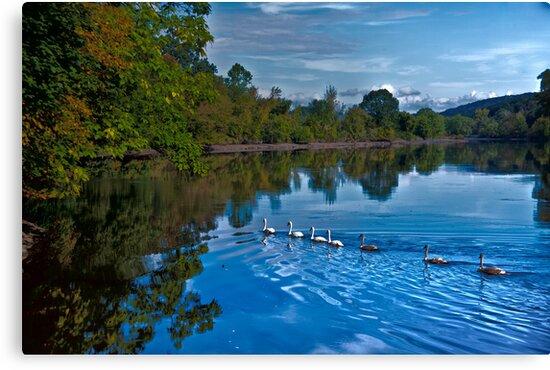 Swanny River by Karol Livote